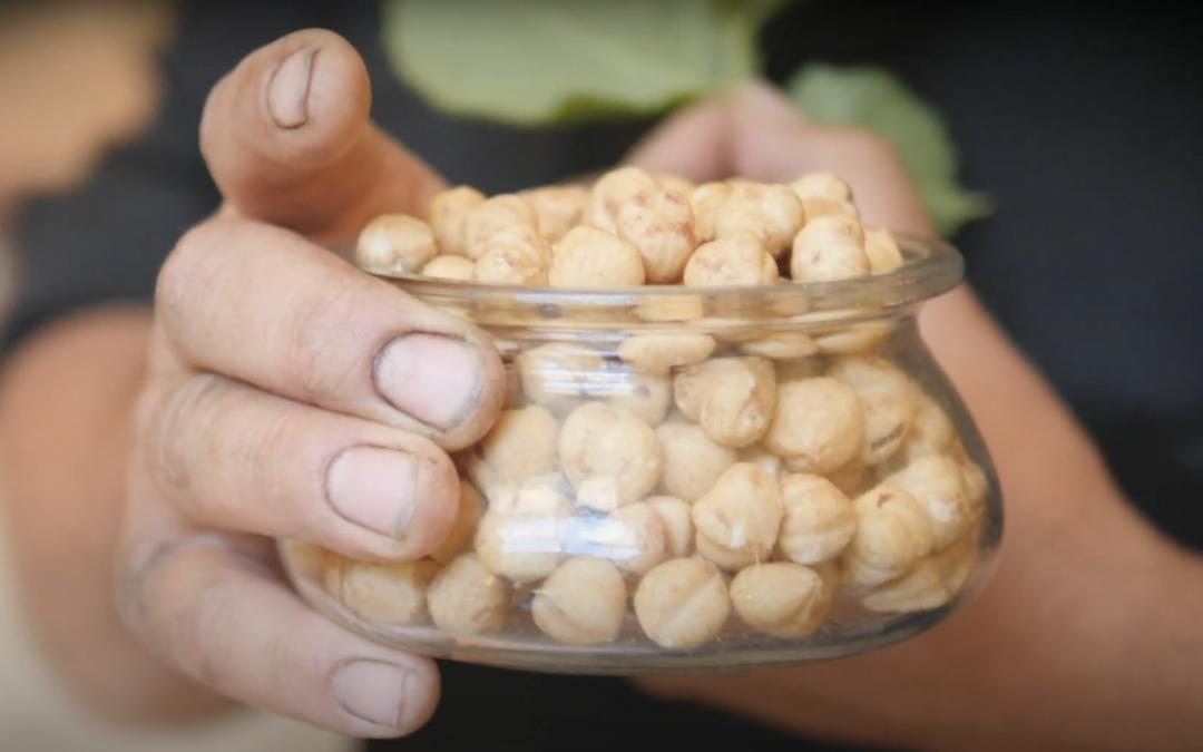 Produzione e vendita nocciole Piemonte – Commercial Video