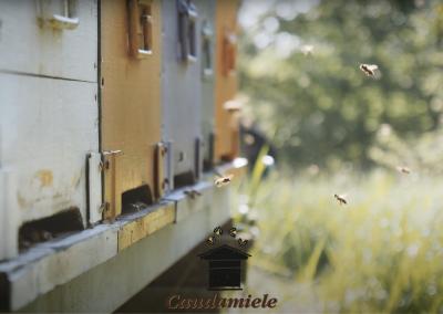 L' incredibile mondo delle api – Commercial Video